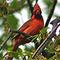 Arlington Cardinal Territory